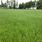 Tráva zblízka